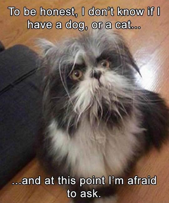 funny-cat-looks-like-dog